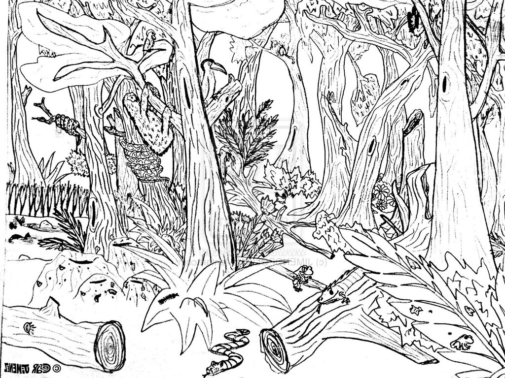 butterfly coloring pages - simple forest drawing 9 pics of forest background coloring page forest coloring pages