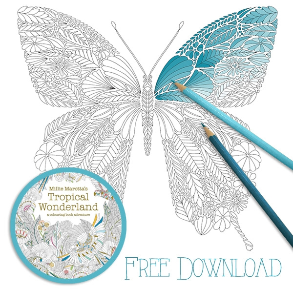 butterfly coloring pages for adults - qdmY 0 0v9JdxMk6