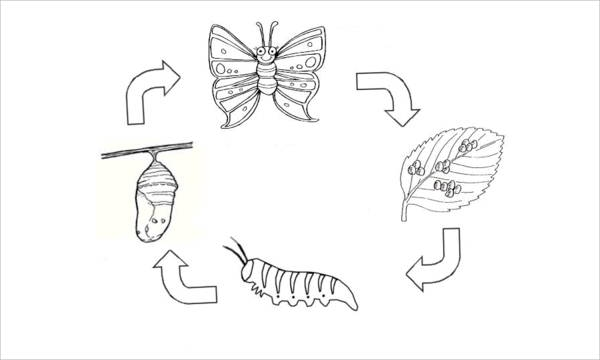 butterfly life cycle coloring page - colouring pages butterfly life cycle