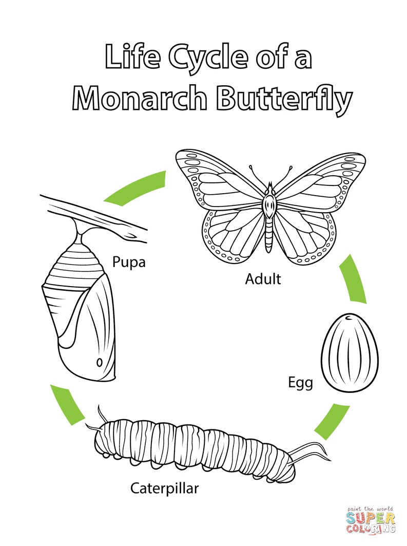 butterfly life cycle coloring page - life cycle of a monarch butterfly