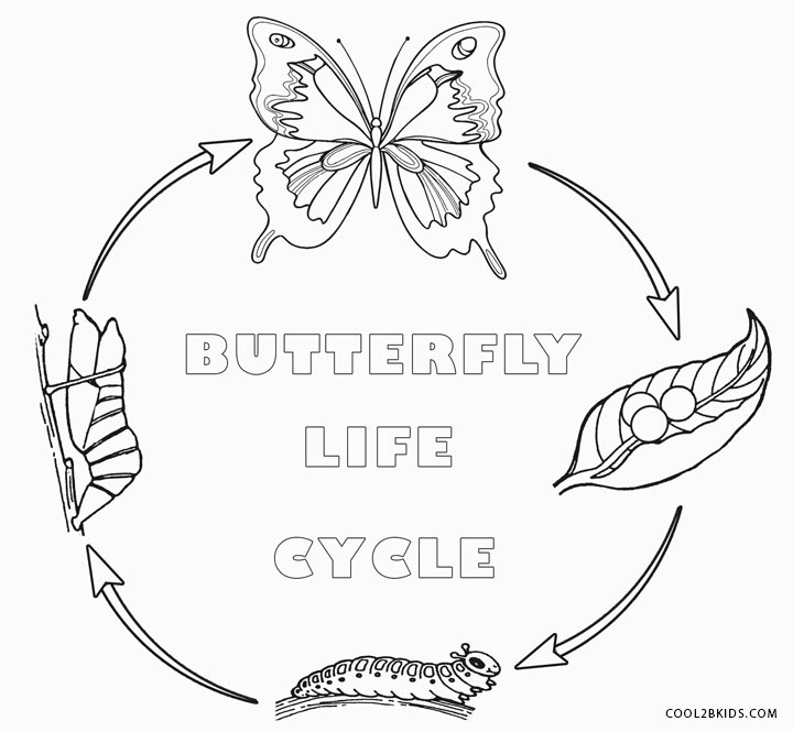butterfly life cycle coloring page - butterfly coloring pages