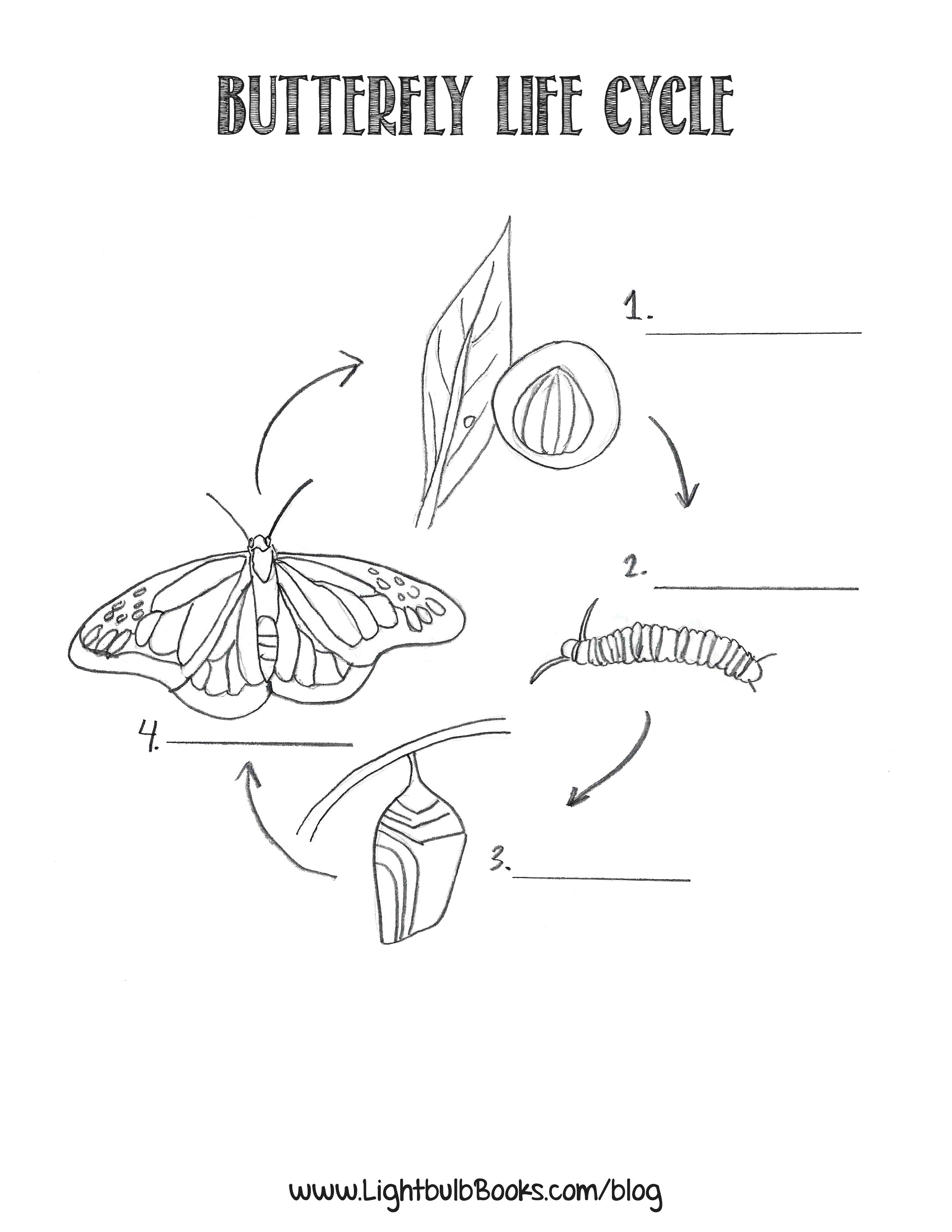 butterfly life cycle coloring page - butterfly life cycle coloring pages