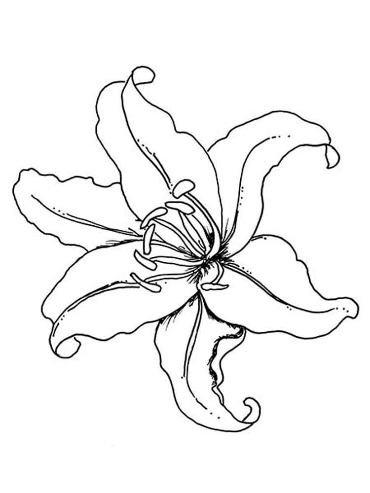 cactus coloring page - lily flower coloring pages