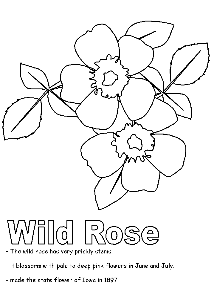 canada flag coloring page - coloring page rose