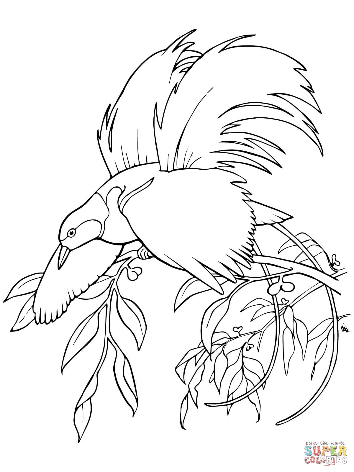 cardinal coloring page - greater bird of paradise