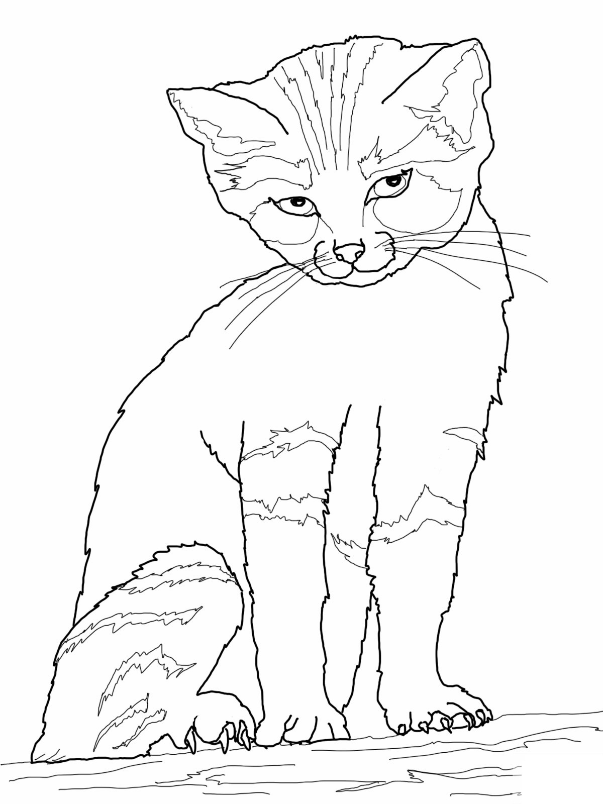 cat coloring pages - cat coloring pages