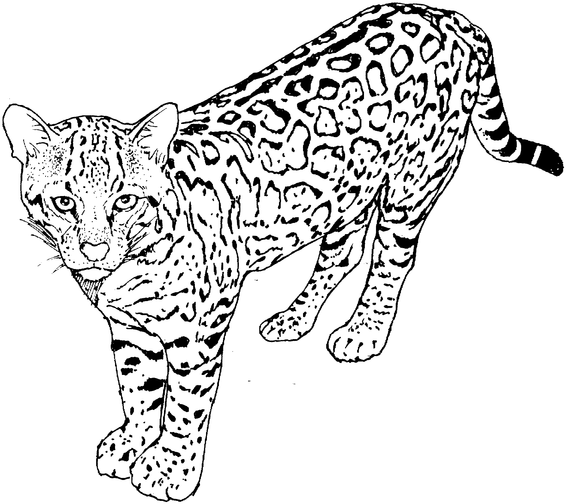 cat coloring pages free printable - q=cat