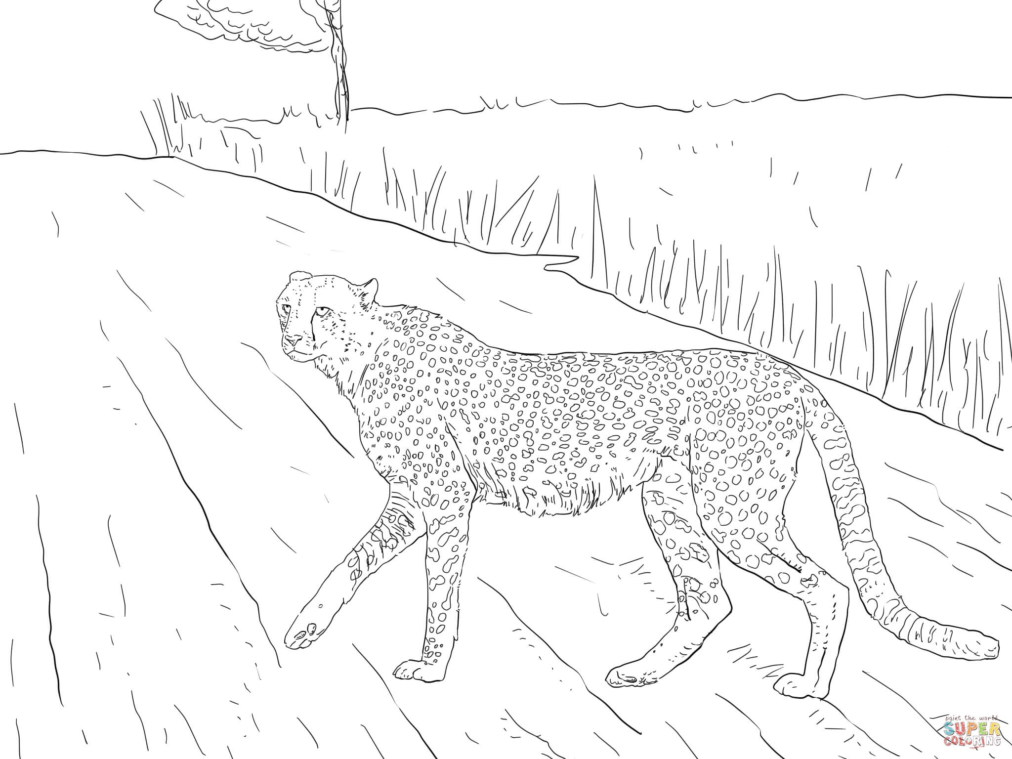 Cheetah Coloring Pages - southern Africa Cheetah From Kruger Coloring Line