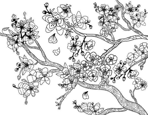 cherry blossom coloring page - cherry blossom coloring page