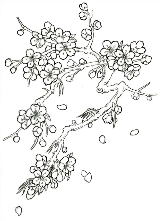 24 Cherry Blossom Coloring Page Collections | FREE COLORING ...