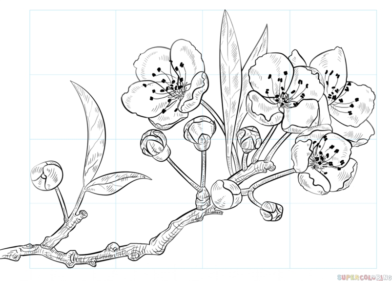 cherry blossom coloring page - easy cherry blossom sketch templates