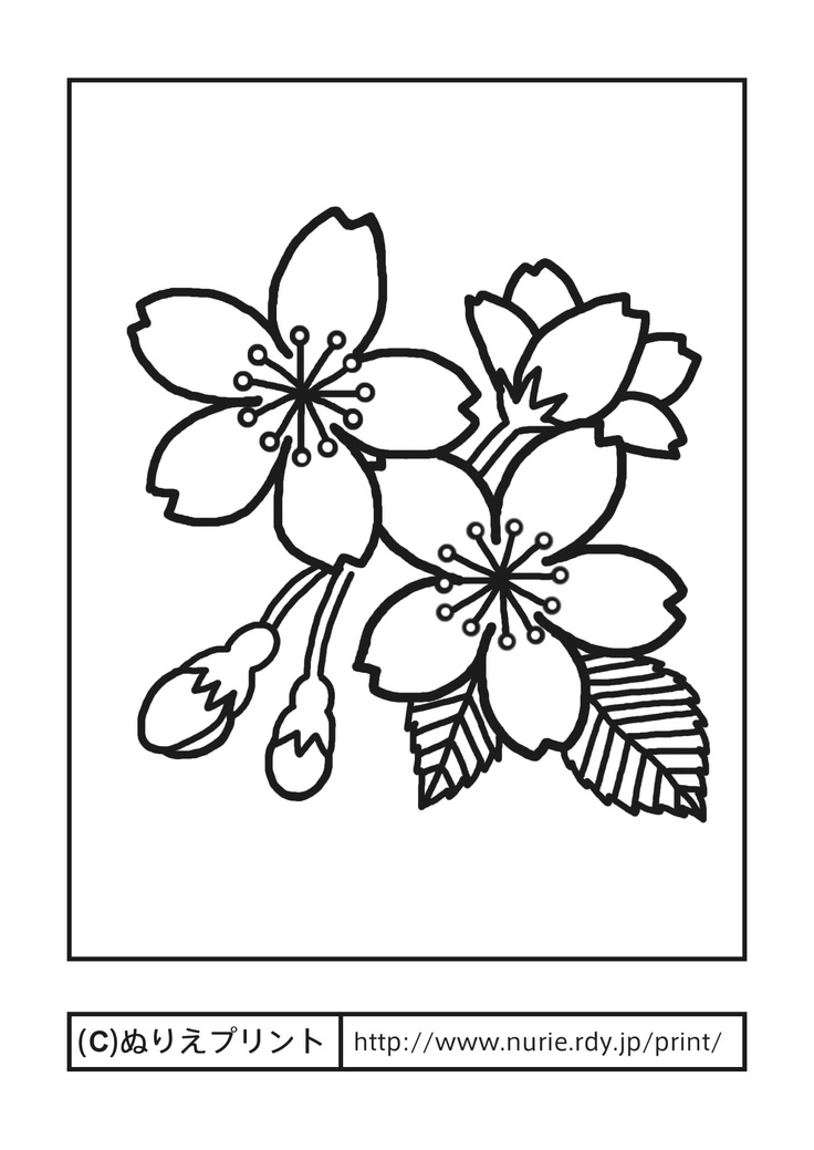 Delighted Cherry Blossom Tree Coloring Pages Photos - Example ...