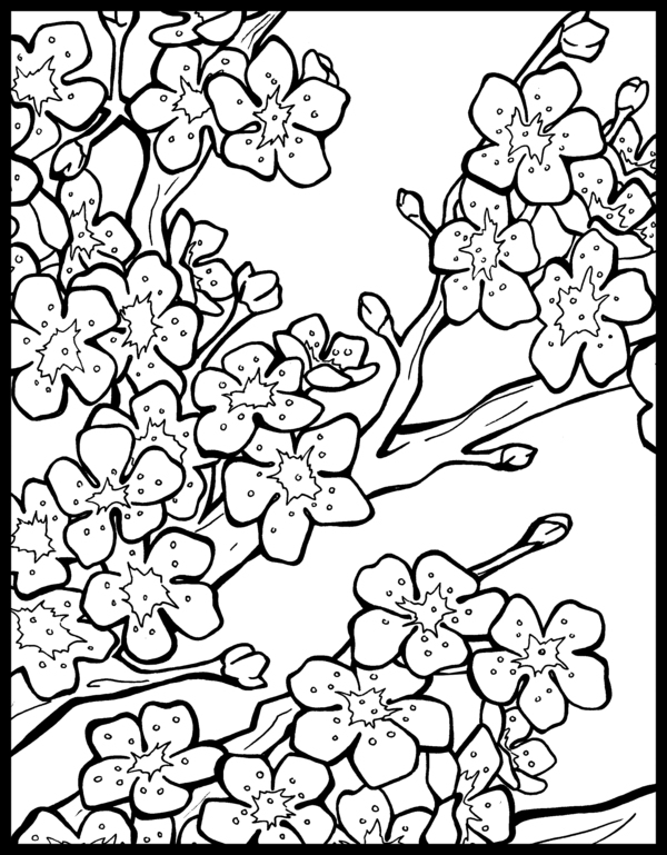 Cherry Blossom Coloring Page - Japanese Cherry Blossom Tree Coloring Coloring Pages