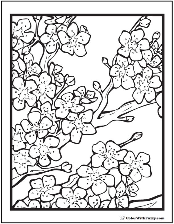 cherry blossom coloring page -