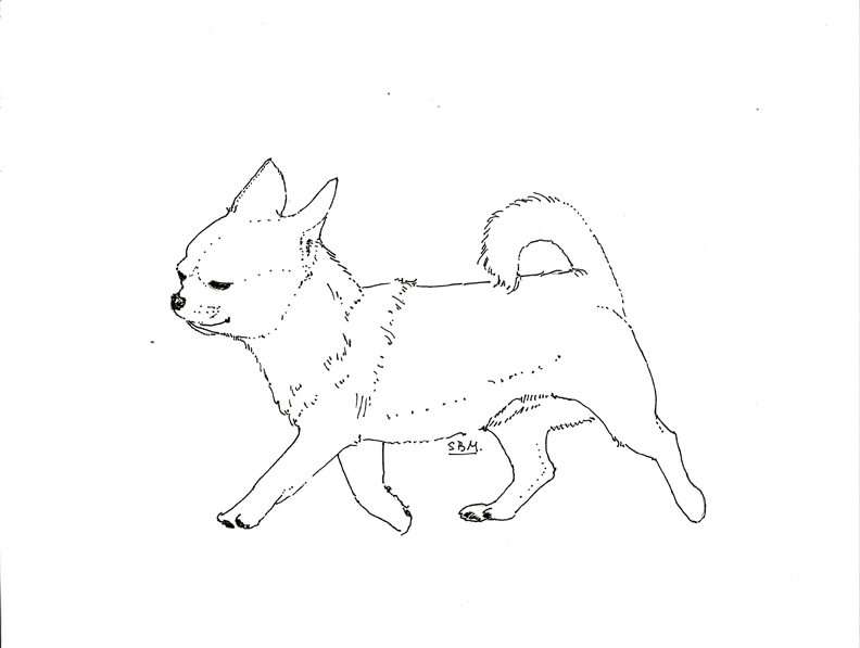 Chihuahua Coloring Pages - Chihuahua Coloring Pages Coloring Home