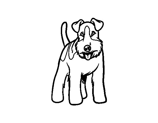 chihuahua coloring pages - chien fox terrier