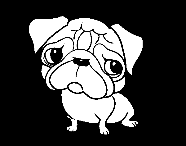 chihuahua coloring pages - pug