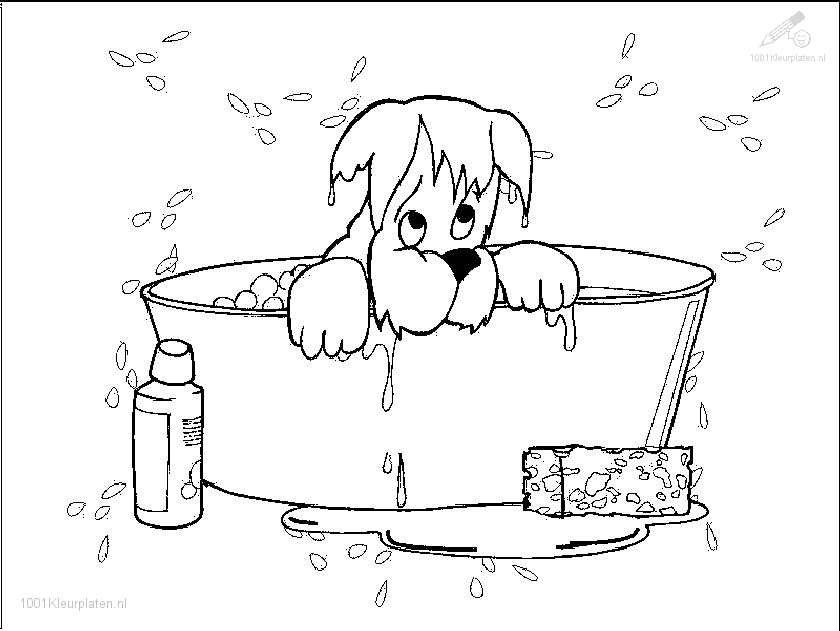 chihuahua coloring pages - hond geniet in bad