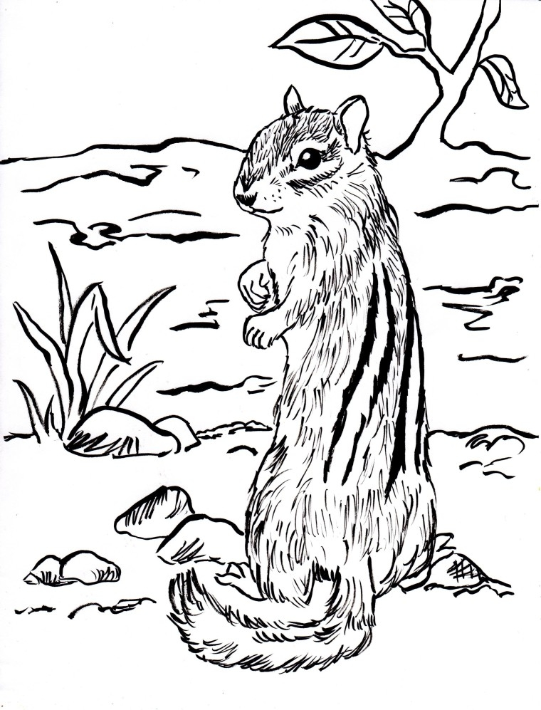 chipmunk coloring pages - chipmunk coloring page