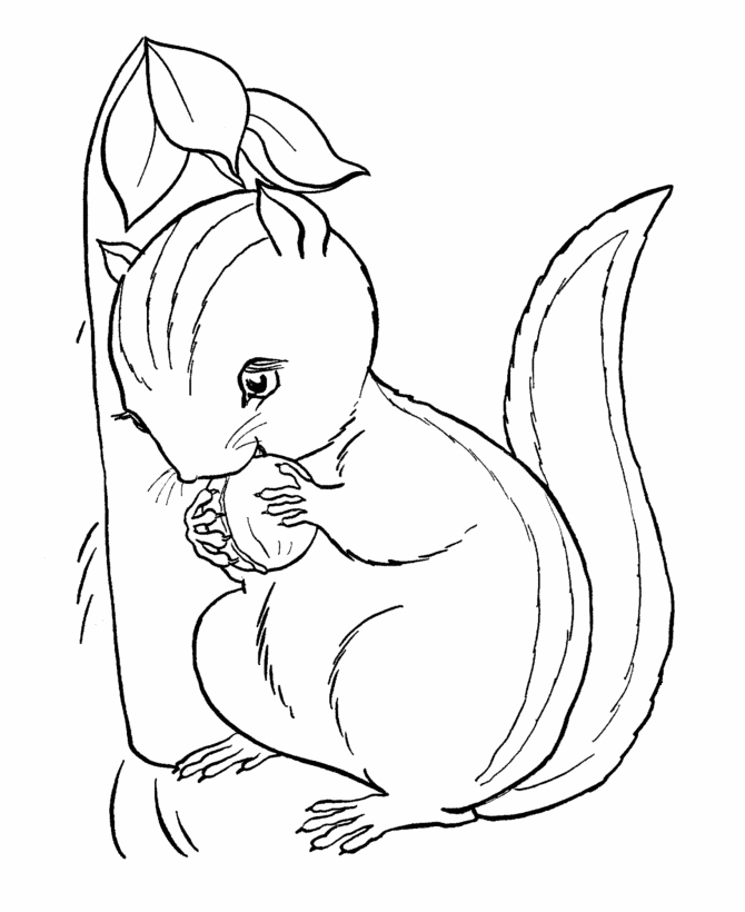 chipmunk coloring pages - cute animal chipmunk printable coloring