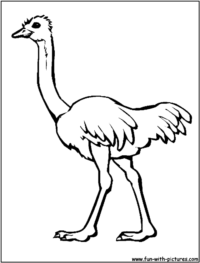 clover coloring pages - ostrich coloring page