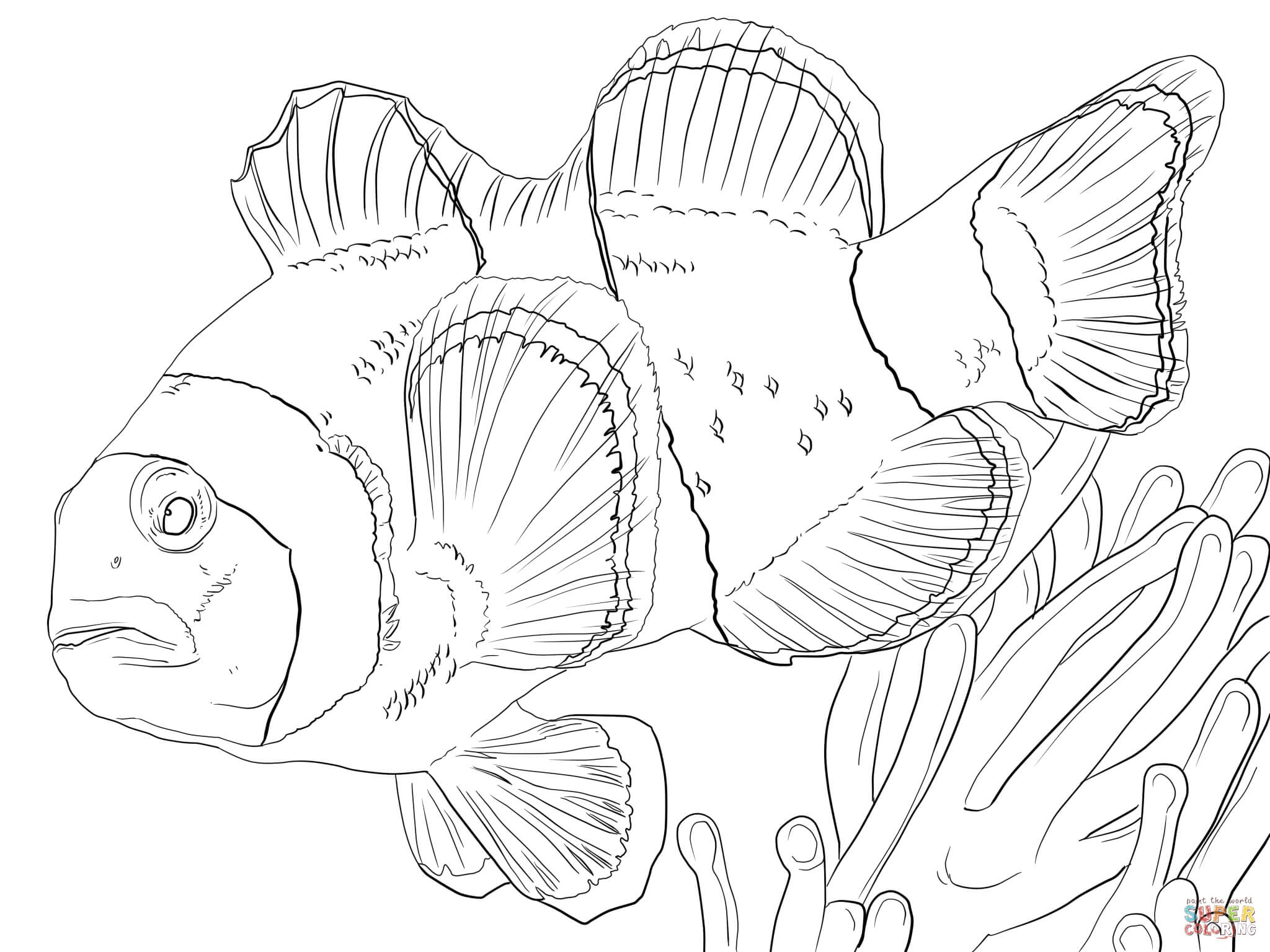 Clown Fish Coloring Page - Ausmalbild Anemonenfisch