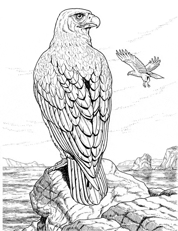 cobra coloring page - eagle coloring 03
