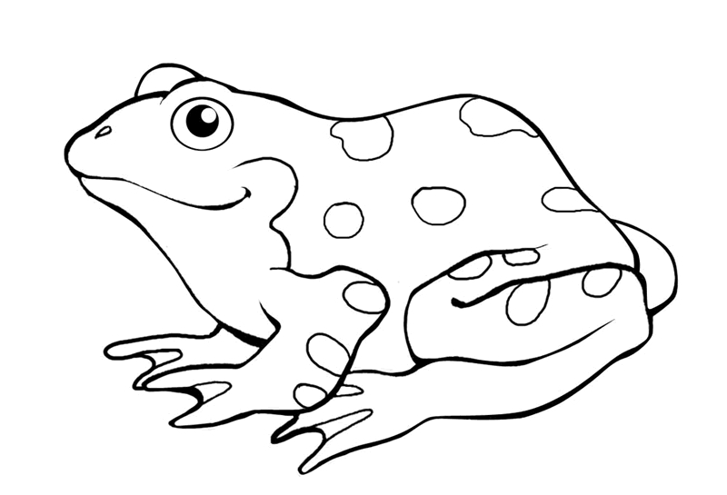 Poison dart frog coloring pages