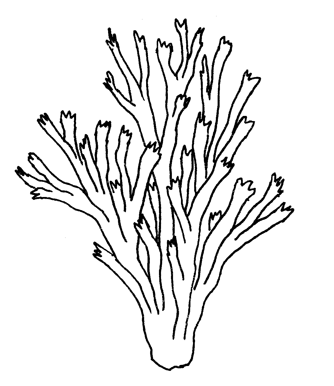 coral coloring pages - seaweed coloring pages