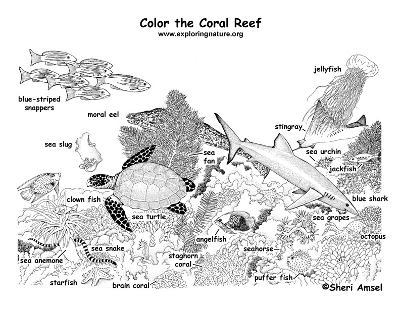 Coral Reef Coloring Page - Coral Reef Labeled Coloring Page