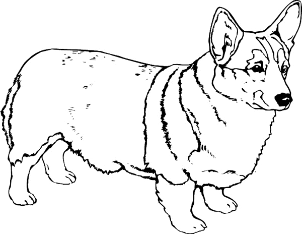 corgi coloring pages - corgi dog printable coloring pages sketch templates