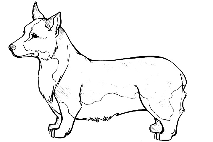 corgi coloring pages - pembroke welsh corgi coloring page super coloring