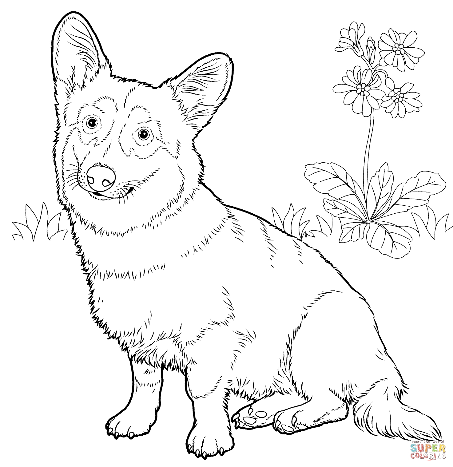 corgi coloring pages - pembroke welsh corgi