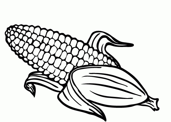 corn coloring page -