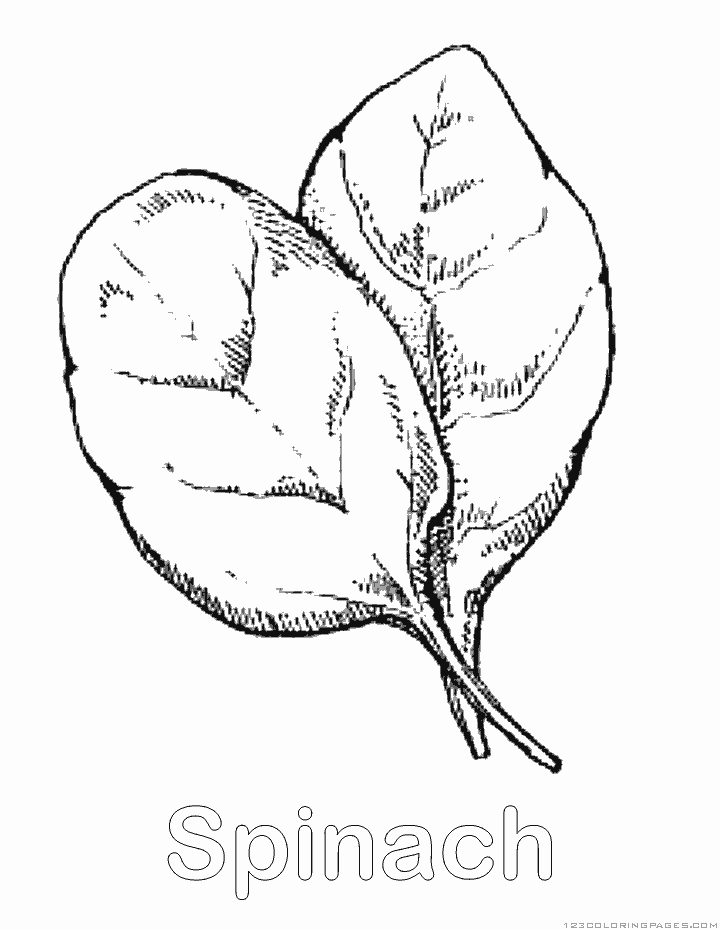 country coloring pages - spinach