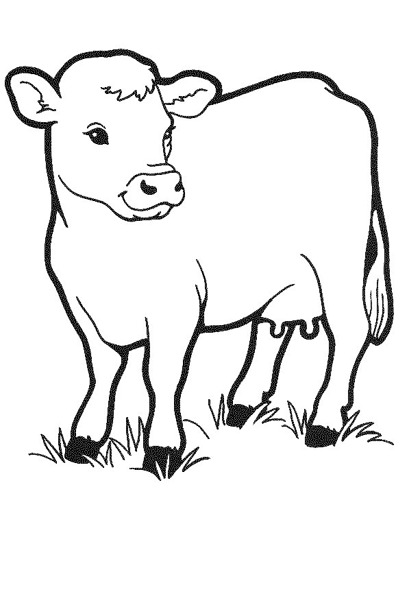 cow coloring pages - cow