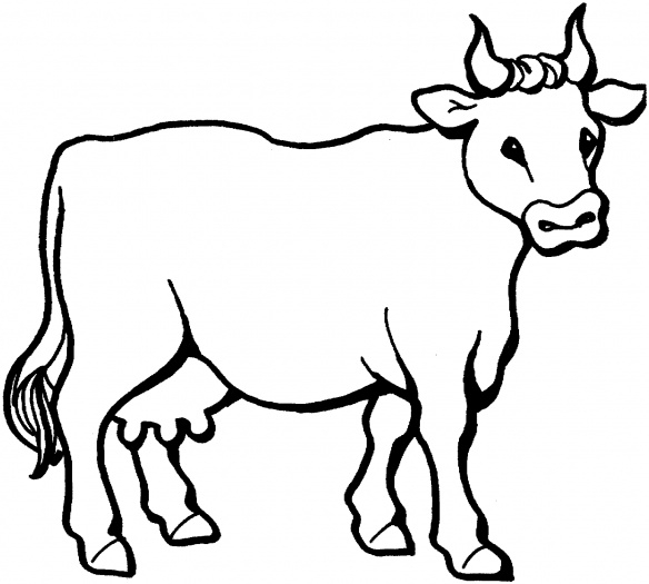cow coloring pages - farm animal cattle cow coloring sheet