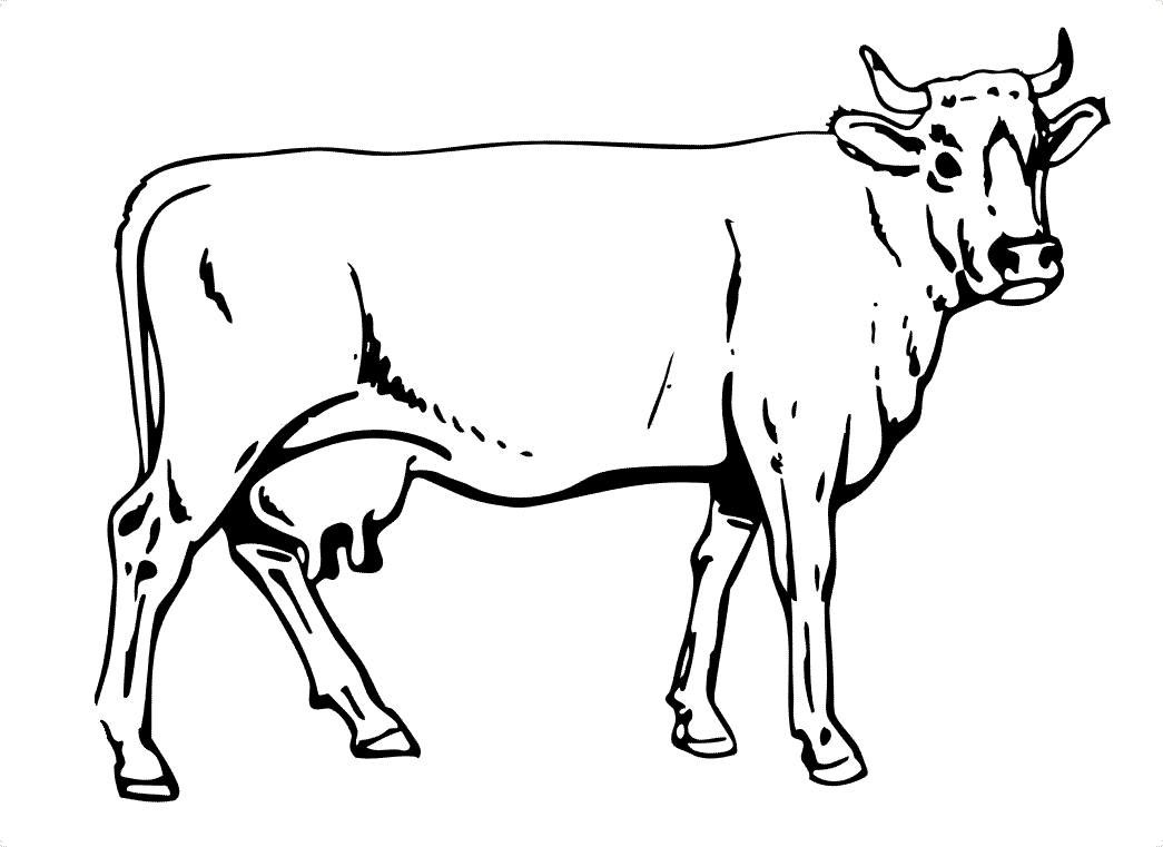 cow coloring pages - cow coloring pages