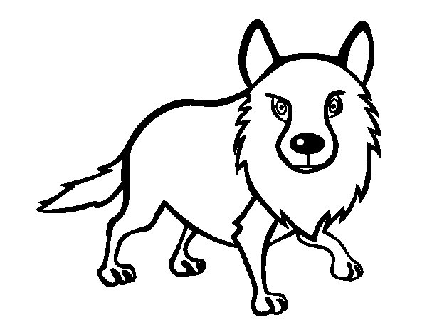 coyote coloring page - coyote adulto