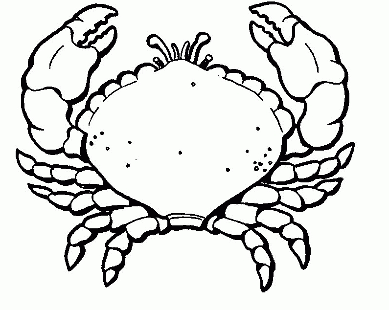 crab coloring pages - crab pictures to color