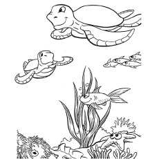 crab coloring pages - amazing sea animals coloring pages for your little ones