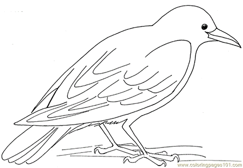 Crow Coloring Page - Coloring Pages Crow Hungry Birds Crow Free Printable