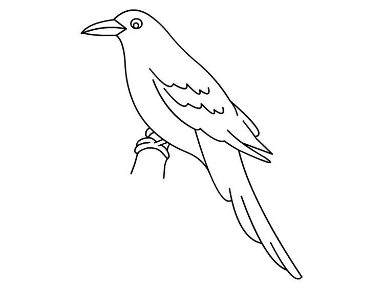 crow coloring page - Crow