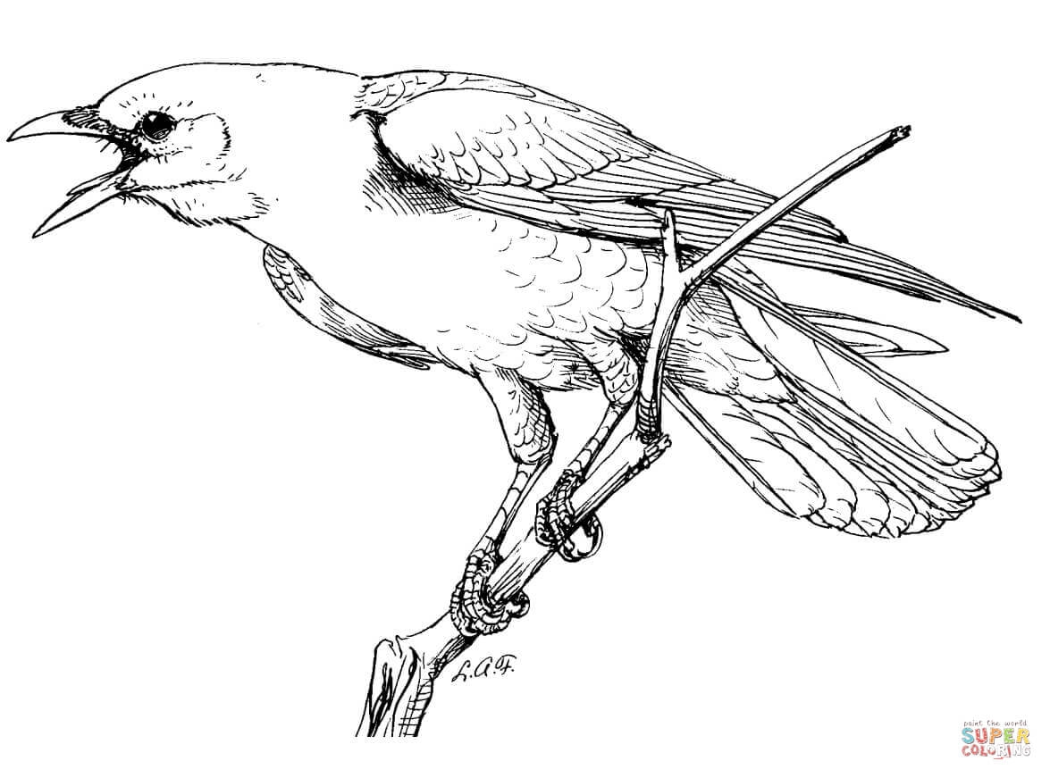 crow coloring page - realistic american crow