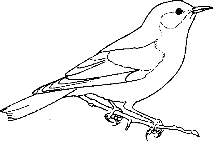 d coloring page - bluebird coloring 04