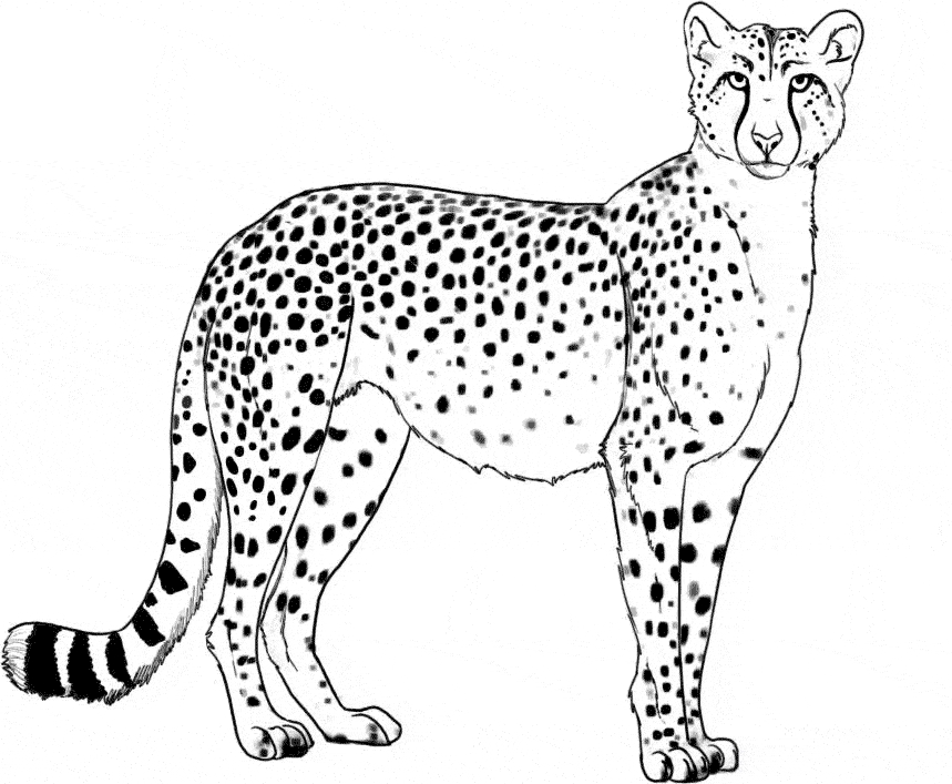 d coloring page - cheetah coloring 04