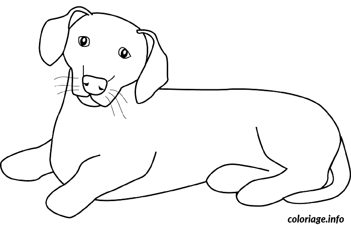 dachshund coloring pages - dessin chien dachsund coloriage dessin 8273