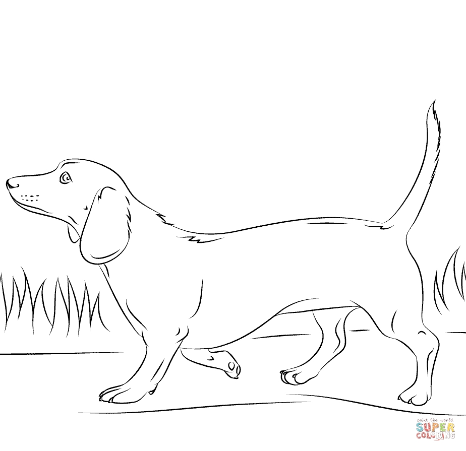 Dachshund Coloring Pages - Dachshund Dog Coloring Page