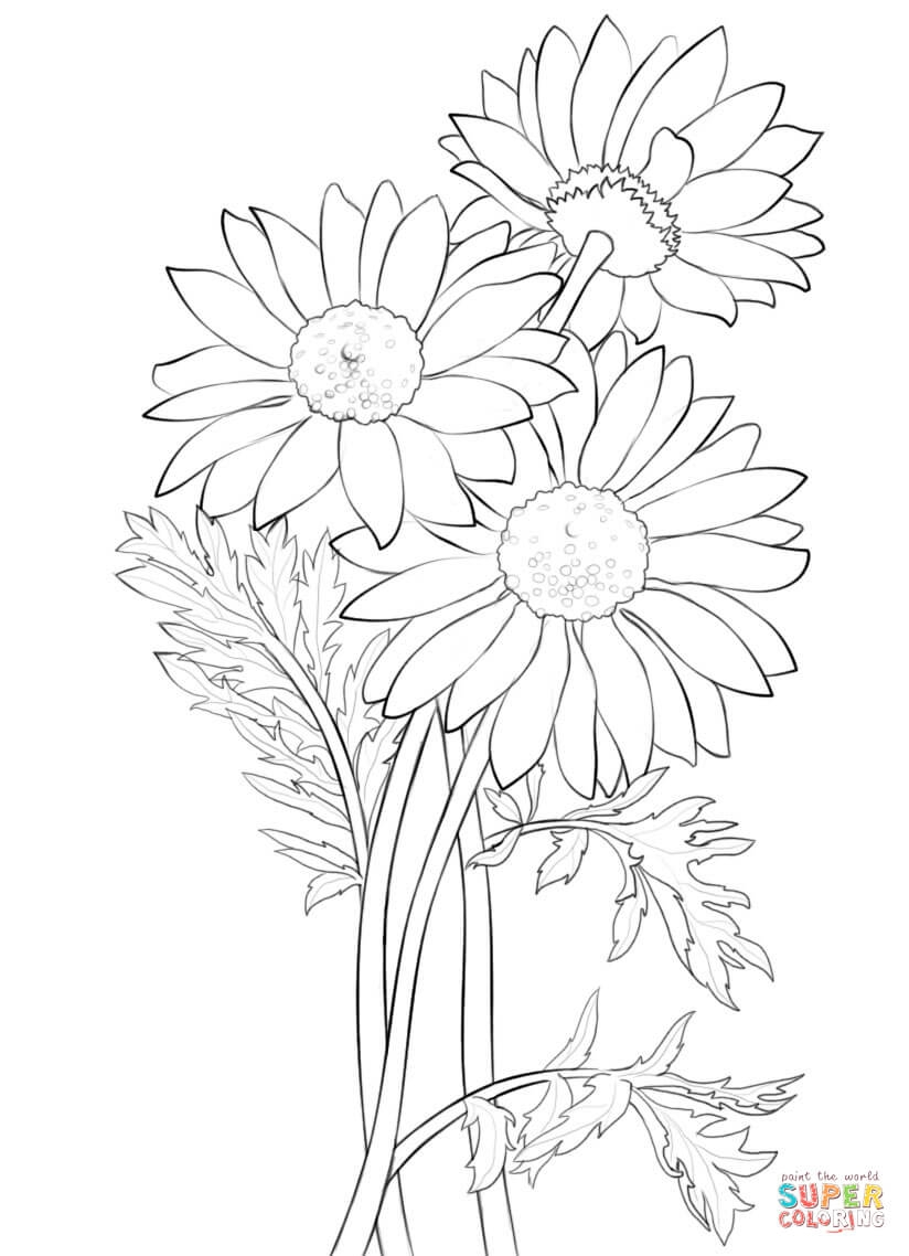 daisy coloring pages - daisy