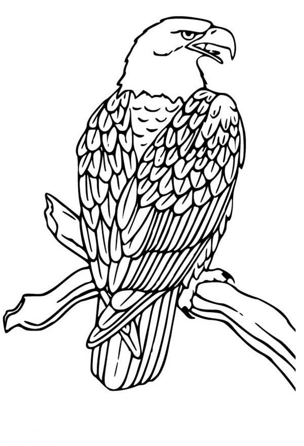 daniel and the lions den coloring page - bald eagle drawing coloring page